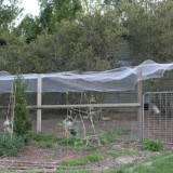 Backyard chicken pen